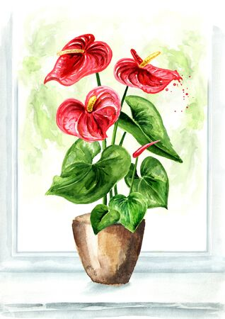 Anthurium, tailflower or flamingo flower  in the pot on the window. Indoor home plant. Watercolor hand drawn illustration isolated on white background Stok Fotoğraf