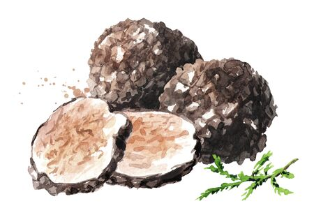Black truffle mushrooms with forest green moss branch, Watercolor hand drawn illustration,  isolated on white background