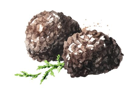 Black truffle mushrooms with forest green moss branch