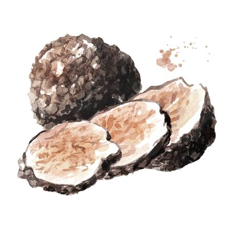 Black truffle mushrooms 版權商用圖片