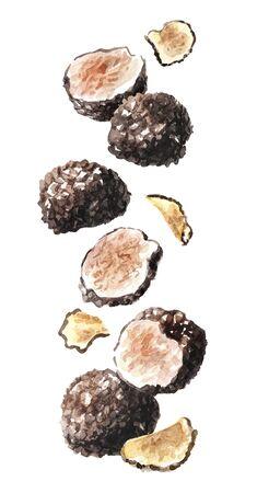 Flying black truffle mushrooms. Watercolor hand drawn illustration  isolated on white background Stockfoto