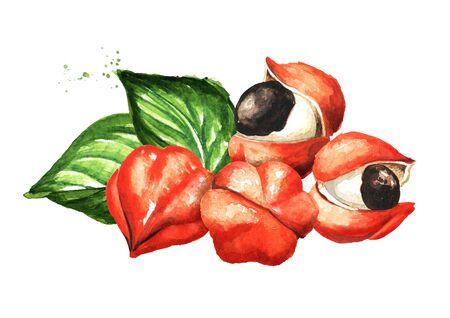 Guarana berries on white