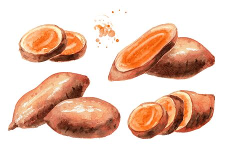 Whole and cut Raw sweet potato  set.