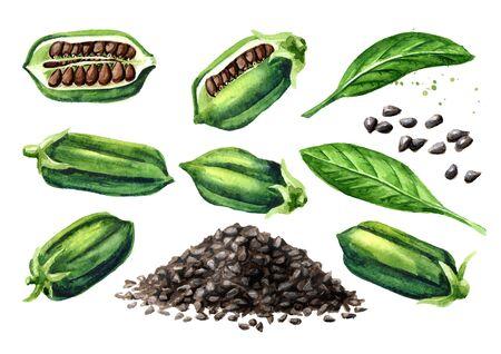 Sesame pods with black seeds set Imagens