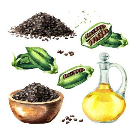Fresh Sesame pods, black seeds and bottle with oil set.