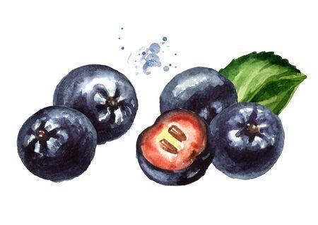 Jagody aronii lub aronii czarnej z zielonym liściem.