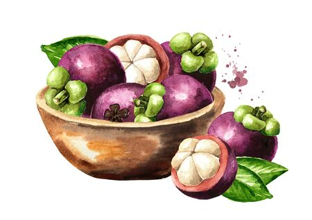 Bowl with fresh Mangosteen fruits, Watercolor hand drawn illustration isolated on white background