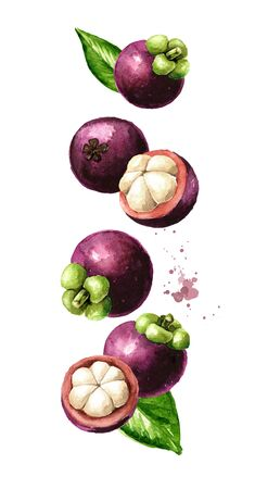 Flying Mangosteen fruits wit slices and leaves. Watercolor hand drawn illustration  isolated on white background Stock Photo