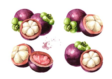 Fresh ripe Mangosteen fruits set, Watercolor hand drawn illustration isolated on white background Reklamní fotografie