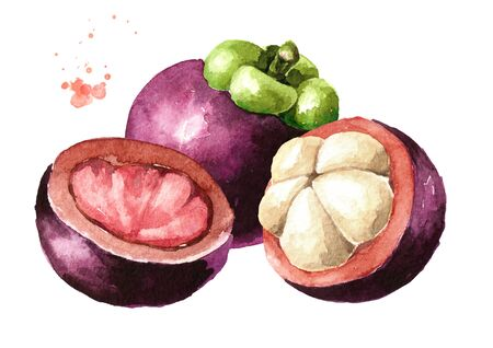 Whole and cut mangosteen fruits, Watercolor hand drawn illustration isolated on white background