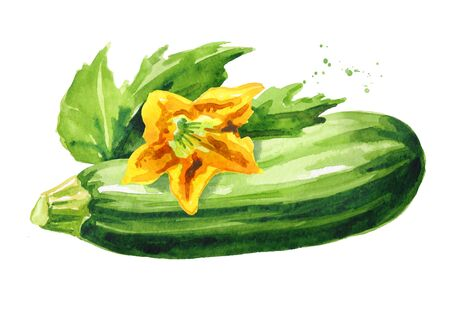 Green zucchini vegetable with leaf and flower.