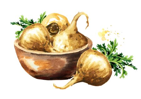 Bowl with Maca root or Peruvian ginseng. Organic vegetable, superfood. Watercolor hand drawn illustration, isolated on white background