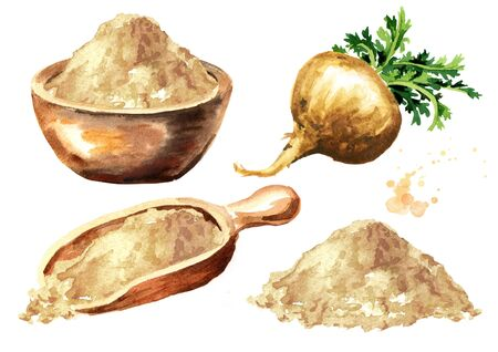 Maca root or Peruvian ginseng with maca powder set. Organic vegetable, superfood. Watercolor hand drawn illustration isolated on white background