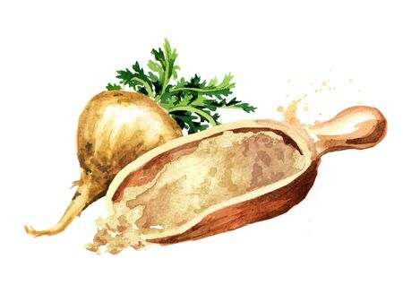 Maca root or Peruvian ginseng with maca powder. Organic vegetable, superfood. Watercolor hand drawn illustration isolated on white background