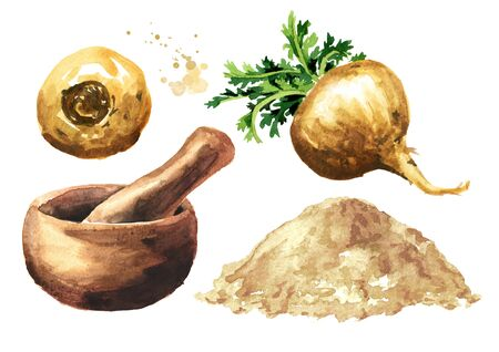 Maca root or Peruvian ginseng with powder and mortar set, Organic vegetable, superfood. Watercolor hand drawn illustration, isolated on white background Stock Photo