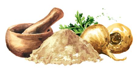 Maca root or Peruvian ginseng with powder and mortar, Organic vegetable, superfood. Watercolor hand drawn horizontal illustration, isolated on white background