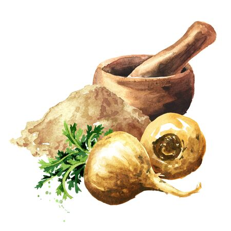 Maca root or Peruvian ginseng with powder and mortar, Organic vegetable, superfood. Watercolor hand drawn illustration, isolated on white background