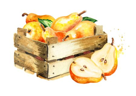 Box with Fresh ripe red yellow honey pear fruits. Hand drawn watercolor illustration, isolated on white background Stock fotó