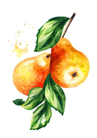 Branch with fresh ripe red yellow honey pear fruits. Hand drawn watercolor illustration, isolated on white background
