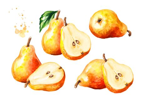 Fresh ripe honey pear fruit with green leaf set. Hand drawn watercolor illustration, isolated on white background