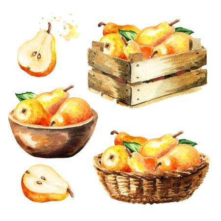 Fresh ripe honey pear fruits crop or harvest. Hand drawn watercolor illustration isolated on white background Stock fotó