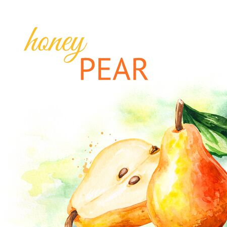 Fresh ripe red yellow honey pear background. Hand drawn watercolor illustration