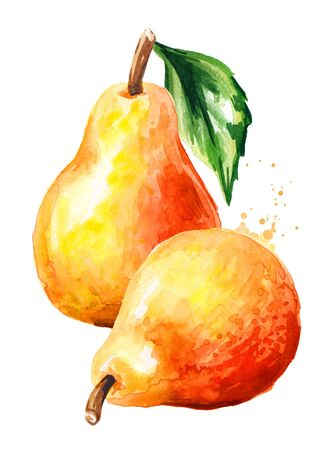 Fresh ripe red yellow honey pear fruit. Hand drawn watercolor illustration isolated on white background Stock fotó