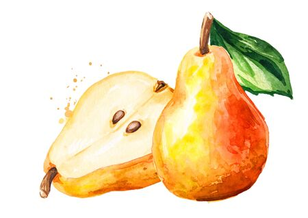 Fresh ripe red yellow honey pear fruits with green leaf. Hand drawn watercolor illustration, isolated on white background