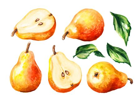 Fresh ripe red yellow honey pear fruits with green leaves set. Hand drawn watercolor illustration, isolated on white background