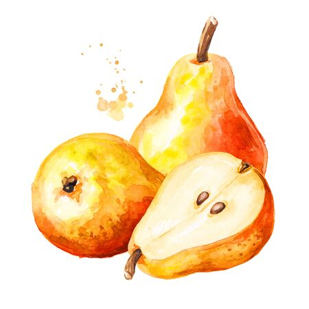 Fresh ripe red yellow honey pear fruits. Hand drawn watercolor illustration isolated on white background Stock fotó