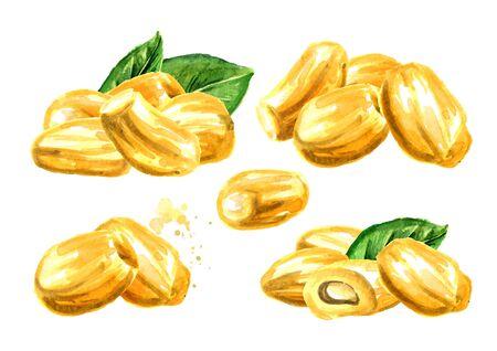 Jackfruit set. Hand drawn watercolor illustration, isolated on white background Stock fotó