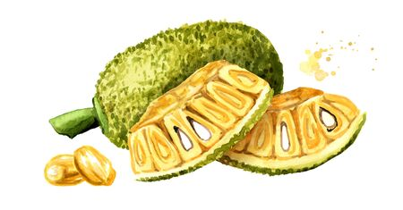 Whole and cut Jack fruit. Hand drawn watercolor illustration, isolated on white background Stock fotó