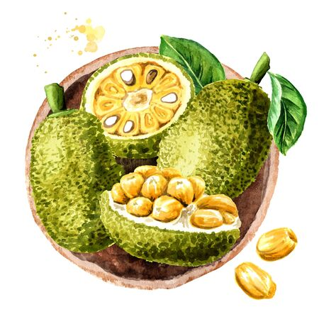 Bowl with Ripe Jack fruit, top view. Hand drawn watercolor illustration, isolated on white background