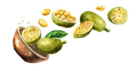 Bowl with Ripe Jack fruit. Hand drawn watercolor illustration, isolated on white background