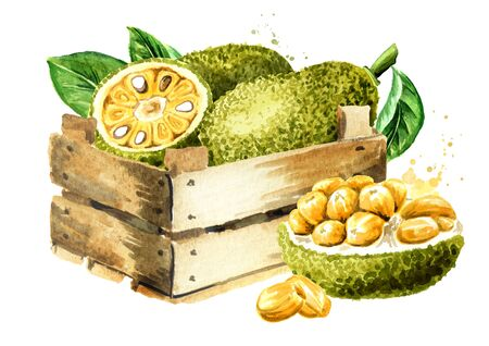 Box with Ripe Jack fruit. Hand drawn watercolor illustration, isolated on white background