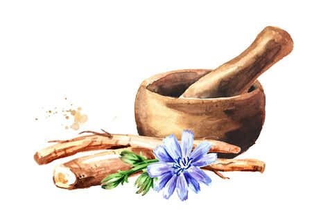 Mortar and chicory root. Watercolor hand drawn illustration, isolated on white background Stock fotó