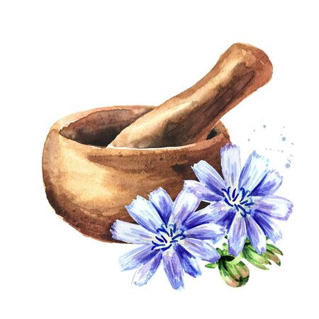 Mortar and Chicory ordinary or сommon or Cichorium intybus. Watercolor hand drawn illustration, isolated on white background