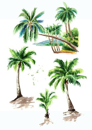 Tropical palm tree set, summer vacation concept. Hand drawn watercolor illustration isolated on white background Stock fotó