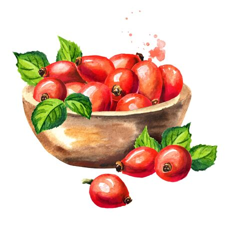 Bowl of wild rose or Rosehip with ripe red briar fruits. Hand drawn watercolor illustration, isolated on white background