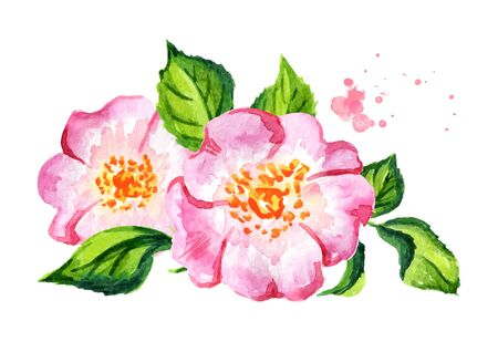 Rosehip flower with leaf. Hand drawn watercolor illustration, isolated on white background