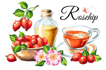 Wild rose or Rosehips with green leaf, oil and tea card. Hand drawn watercolor illustration, isolated on white background