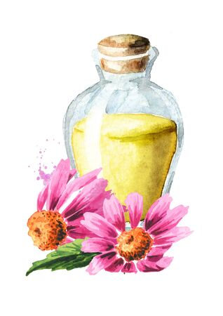 Echinacea purpurea essential oil, flowers and leaves, medical plant or herb. Hand drawn watercolor illustration isolated on white background