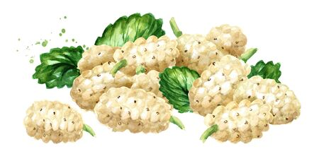Heap of White mulberries with green leaves. Hand drawn watercolor illustration, isolated on white background