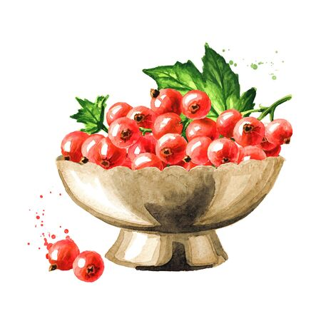 Bowl of Red currant berries, Hand drawn watercolor illustration isolated on white background