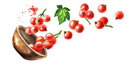 Bowl of Red currant berries. Hand drawn watercolor horizontal illustration isolated on white background Zdjęcie Seryjne