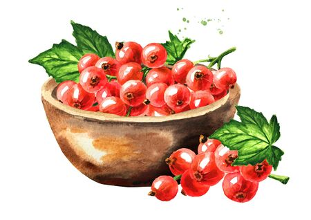 Bowl of Red currant berries. Hand drawn watercolor illustration isolated on white background