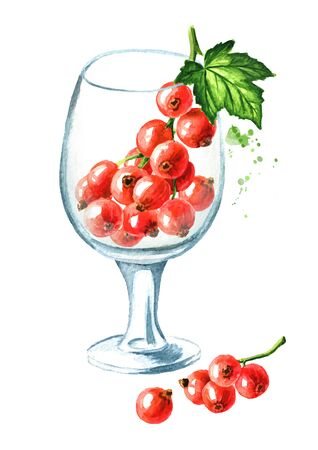 Red currant berries in the glass goblet. Hand drawn watercolor illustration isolated on white background Zdjęcie Seryjne