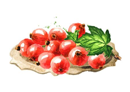 Red currant branch On the plate, Hand drawn watercolor illustration isolated on white background