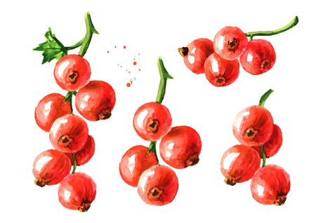 Red currant branch set. Hand drawn watercolor illustration isolated on white background