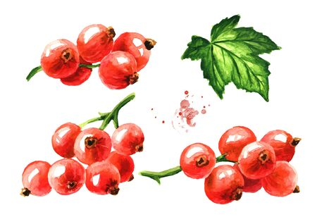 Red currant branch set. Hand drawn watercolor illustration, isolated on white background